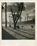 Tree and shadows along road
