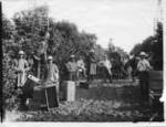Klokke Ranch orange pickers