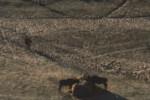 Roan antelope, Hippotragus equinus