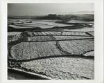 Rice paddies and farm house