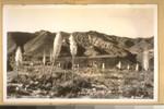 June 1936. California Yuccas. Frashers Fotos, Pomona, Calif