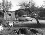 Visiting ranches