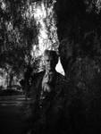 Herman behind tree