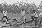 Karagwe Diocese, Tanzania. Nkwenda Bible School, started in 1982. The three year Evangelist Edu, Karagwe Stift, Tanzania. Nkwenda Bibelskole, startet i 1982. På den tre-årige uddannelse til evangelist optages studerende fra ELCT, BDM og den anglikanske Kirke. Der skal også hugges brænde, foto 1989