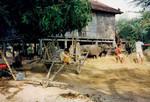 Scener og mennesker fra landsbyen Preah S'Dach. Risen er tærske, Scenes and people from the village, Preah S'Dach. The rice has been threshed