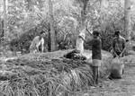 Filippinerne, januar 1993. Udviklingsprojekt startet af Jens Christian Olesen: Tang indsamles på øen Hingotanan. Det skal bruges til kompost/gødning af jorden, The Philippines, January 1993. A development project started by Jens Christian Olesen: Seaweed