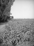 Southern California field
