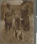 Eland trophy, Mozambique, 1918