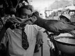 Parrot drinking 7up, Olvera Street