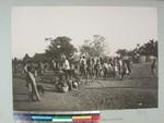 Cattle being branded, Mandronarivo, Madagascar, 1905