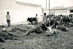 Wollo, Ethiopia, July 1973. Both people and livestock are victims of the drought disaster in th, Wollo, Etiopien, juli 1973. Både mennesker og husdyr er ofre for tørkekatastrofen i de ramte områder af landet