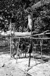 Bangladesh, 1988. Local workers preparing building materials, possibly to a new village school?, Bangladesh,1988. Lokale arbejdere forbereder byggemateriale, måske til en ny landsbyskole? Der er skolebørn i baggrunden til venstre