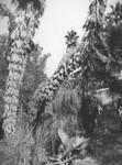 Palm trees growing wild