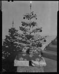 Christmas tree, Los Angeles, circa 1935