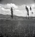 Rice paddies and landscape