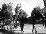 Woman with milk wagon, Lankershim, circa 1910