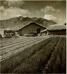 Farm house and fields in Korea