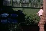 Helen Pepperdine's home movie